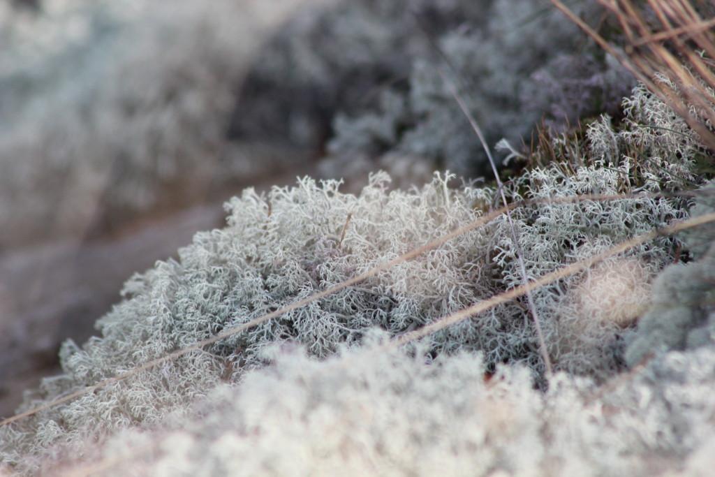 Metsään haluan mennä nyt L I L O U ' s #lilous helsinkiläinen lifestyle-blogi @KPohjanvirta #skärgård #kemiö #Taalintehdas